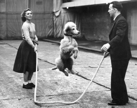 many with poodle an skipping rope